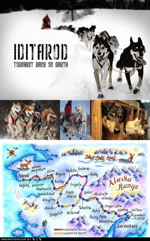 dog sled dogsledding husky iditarod mush race - 5921497344