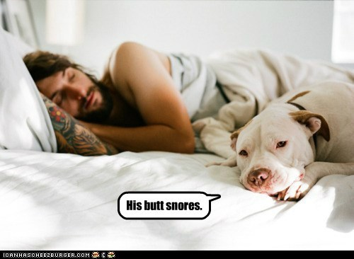 best of the week dogs funny Hall of Fame pitbull - 5921938688