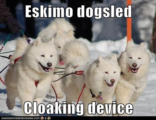 Eskimo dogsled Cloaking device