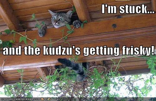I'm stuck... and the kudzu's getting frisky!