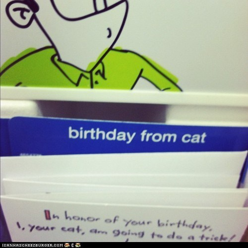 birthday cards birthdays cards Cats Sad - 5922344192