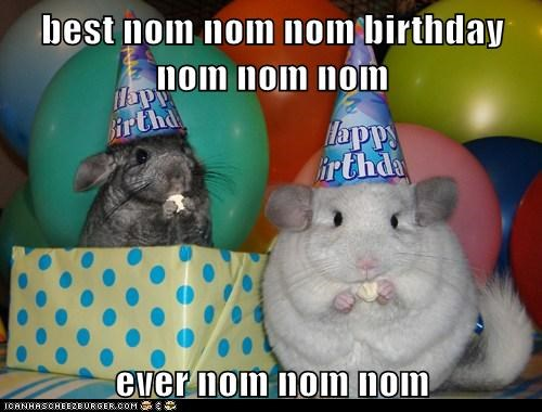 birthday,celebrate,chinchilla,cute,hat,nom,squee