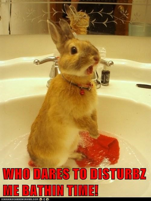 bath naked privacy rabbit yell - 5922482432