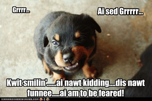 best of the week cyoot dogs funny Hall of Fame puppy rottweiler - 5923056896