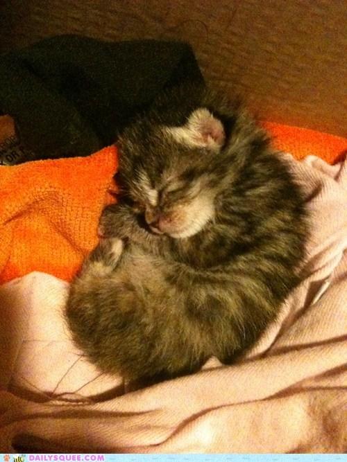 baby cat cute cuteness kitten tiny - 5923437824