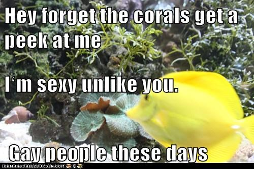 Hey forget the corals get a peek at me Iʻm sexy unlike you.  Gay people these days