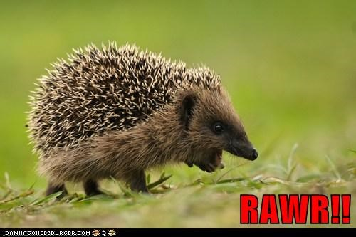 cute hedgehog hedgehogs rawr roar squee tiny - 5924065792