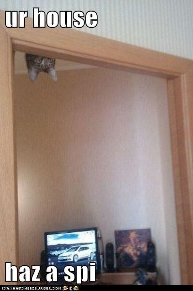cat,ceiling,danger,door,lolcat,ninja,silent,sneaky,spy