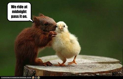 birds chickens chicks chipmunks pass it on secrets squirrels whispering - 5924445696