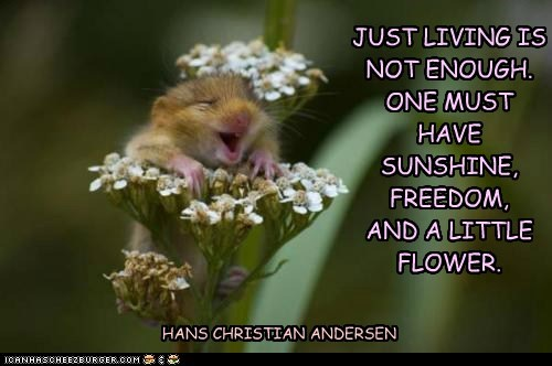 JUST LIVING IS NOT ENOUGH. ONE MUST HAVE SUNSHINE, FREEDOM, AND A LITTLE FLOWER. HANS CHRISTIAN ANDERSEN