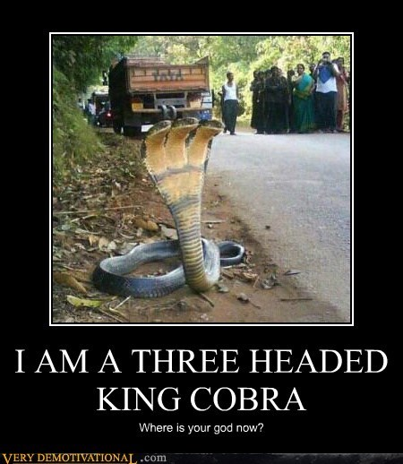 I AM A THREE HEADED KING COBRA Where is your god now?