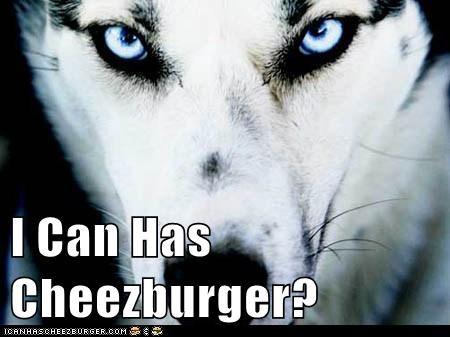 Cheezburger Image 5925327360