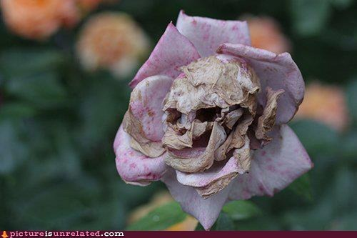 Damn Nature U Crazy dead rose skull wtf - 5925883136