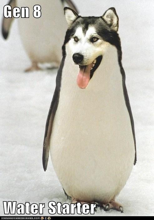 husky morph penguin weird wtf - 5925979904
