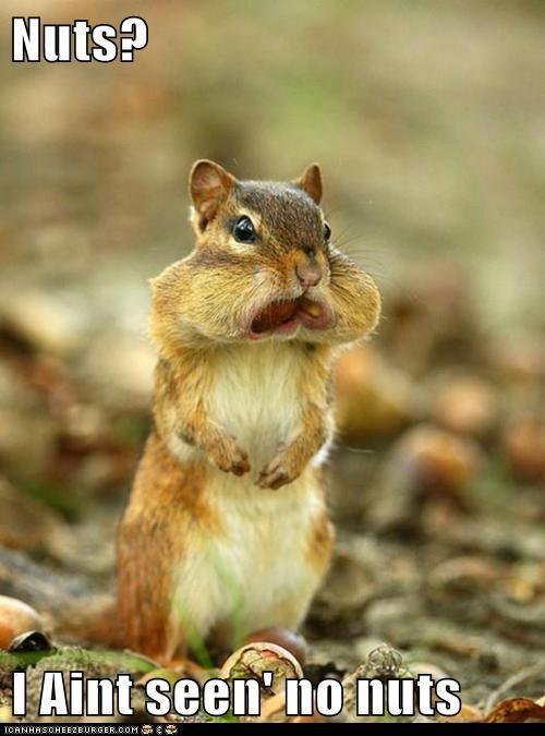 cheeks eat food nom nuts squirrel - 5926160896