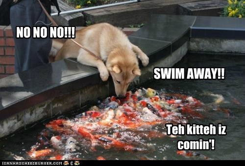 dogs,fish,funny,what breed