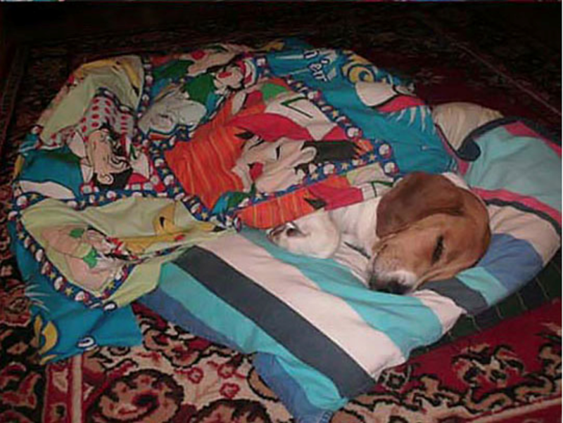 dogs cute dogs dog sleeping cute funny dogs sleeping bag sleeping funny - 5926917