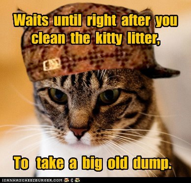 Waits until right after you clean the kitty litter, To take a big old dump.
