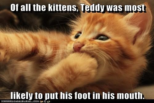 Of all the kittens, Teddy was most likely to put his foot in his mouth.