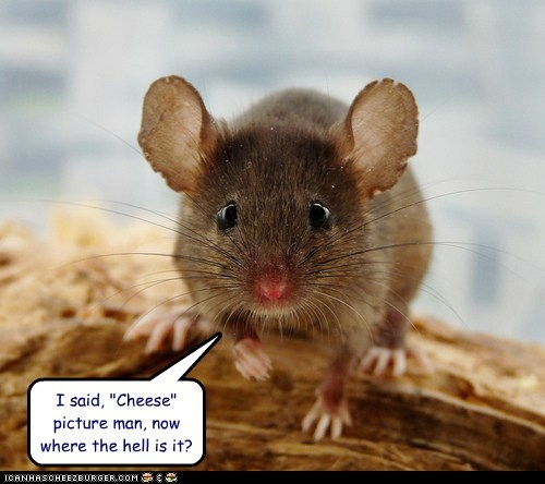cheese,mice,mouse,pictures,rats,say cheese,want,where