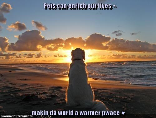 cute dogs enrichment goggies inspirational pets sunset sunsets sweet warm