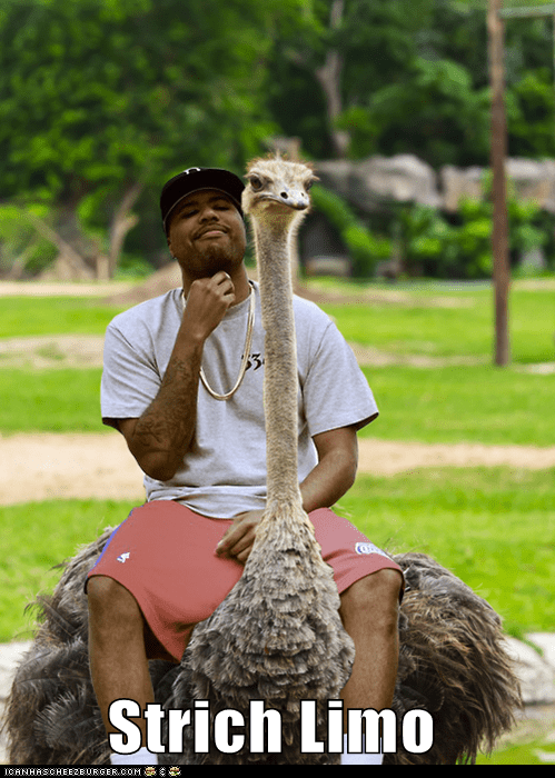 limos,limousine,ostrich,ostriches,photoshopped,puns,stretch limo