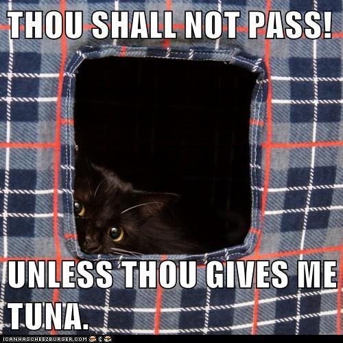 THOU SHALL NOT PASS!  UNLESS THOU GIVES ME TUNA.