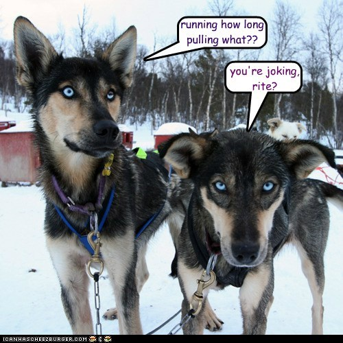 dog sled iditarod race - 5929464064