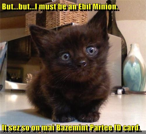 basement basement cat cute evil id kitten minion Sad - 5929816832