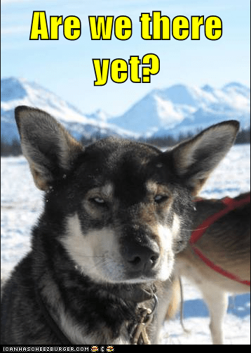 dogs,dog sledding,funny,iditarod,news,sled dog,update