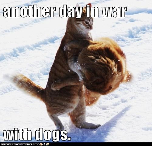 another day in war  with dogs.