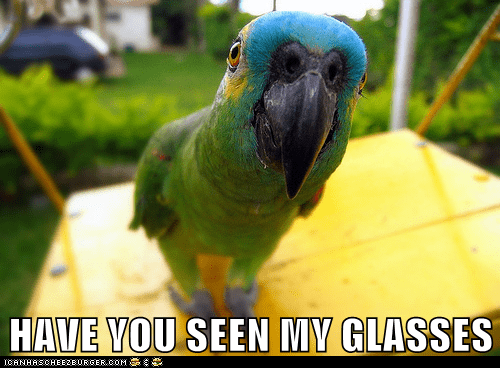 eyes,eyesight,glasses,parrot,vision
