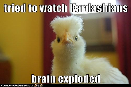 brain explosion,chicken,kardashians,reality tv,stupid,tried,watching
