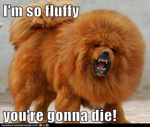 best of the week chow dogs funny Hall of Fame idk tibetan mastiff - 5931783168