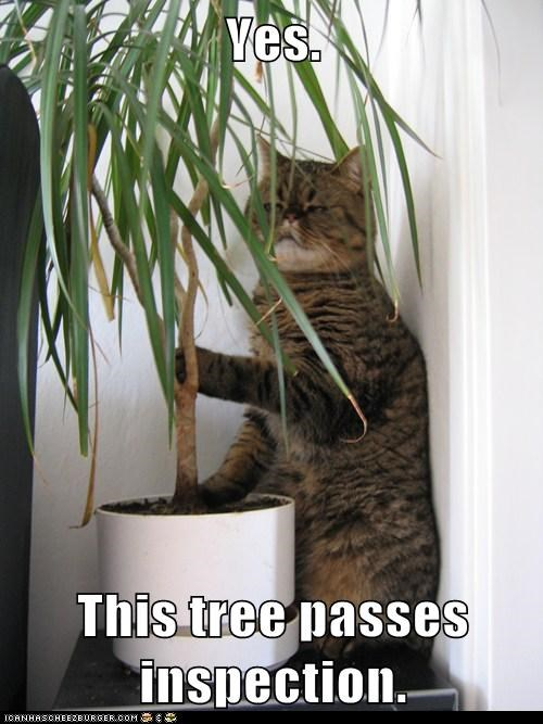 cat inspection judge lolcat tree weird wtf - 5932640256