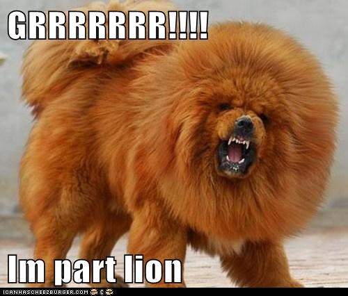 GRRRRRRR!!!!  Im part lion