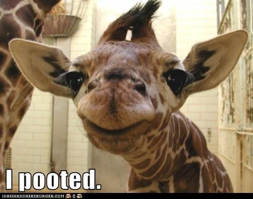 fart flatulence giraffes gross poot smell smug - 5933218304