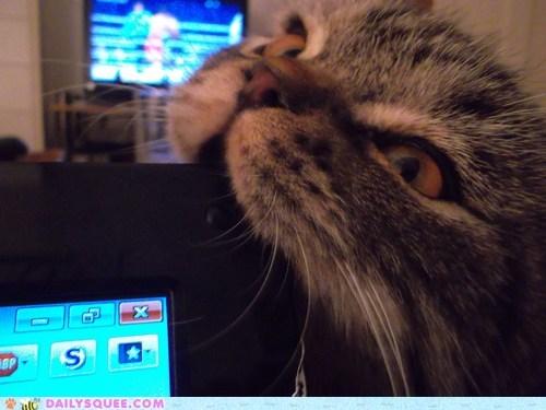 bite cat computer nom pets reader squees screen - 5933420800