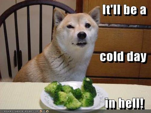 dogs food funny shiba inu - 5933428480