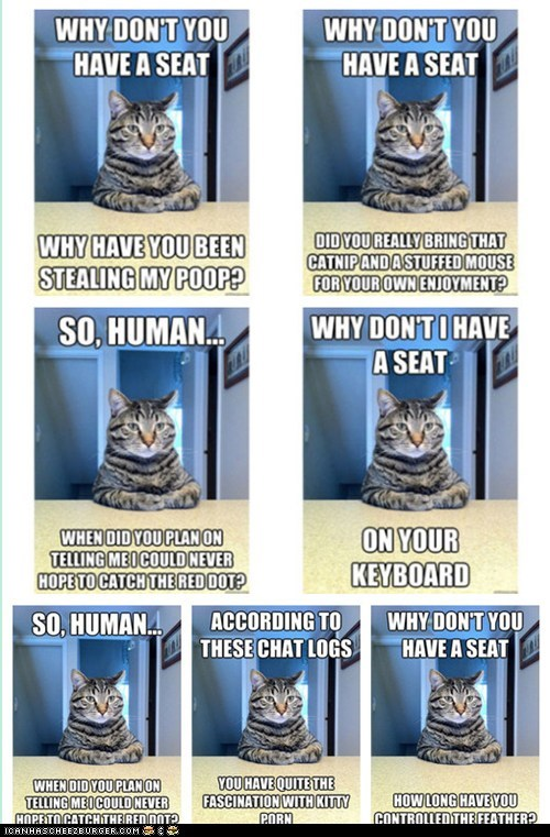 Cats Chris Hansen chris hansen cat Dateline Memes sitting to catch a predator - 5933531648
