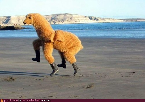beach,costume,happy,llama,skipping,wtf