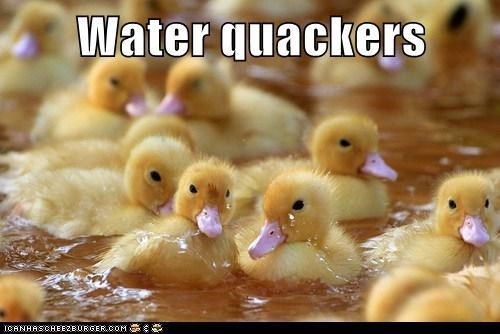 baby,bird,crackers,cute,ducklings,ducks,pun,squee,swim