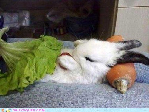 blanket bunny carrot happy bunday Pillow sleep - 5934577920