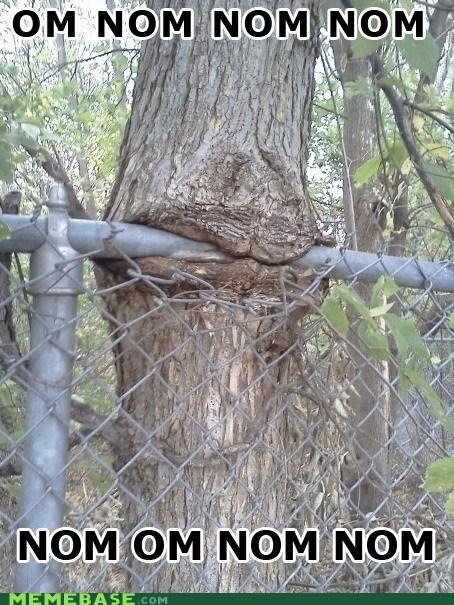 angerbirds,Memes,om nom nom,trees
