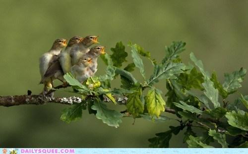 beg birds branch chicks eat tweet - 5934680576