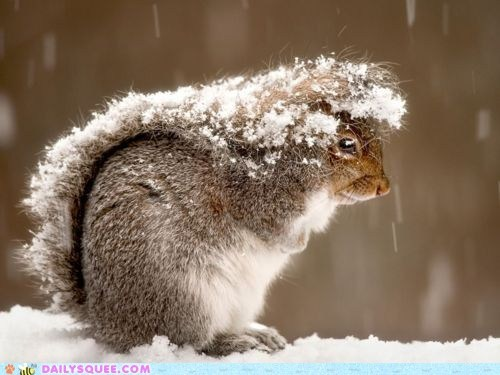 fashion,hood,snow,squirrel,tail