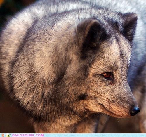 arctic fox furry warm - 5934746624