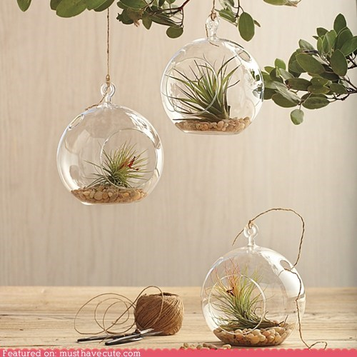 airplants decor garden glass globe hanging plant - 5934889472
