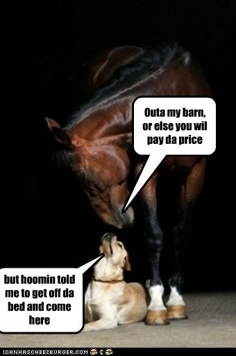 Outa my barn, or else you wil pay da price but hoomin told me to get off da bed and come here