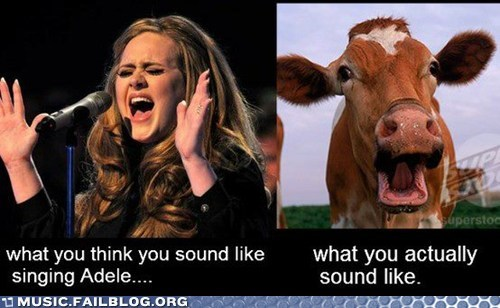 adele,cow,karaoke,singing